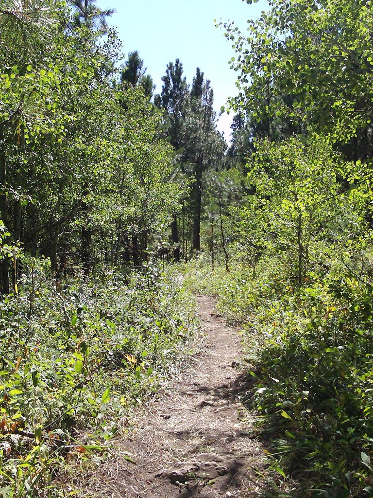 Red Lake Trail spur, west of Spearfish Canyon, Black Hills, South