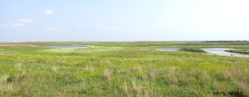 Prairie wetlands, Hoffman farm, 2014.08.19