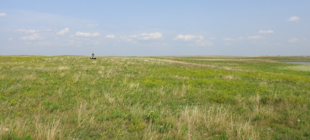 Charlie in the distance, four-wheeling across the prairie, Hoffman farm, 2014.08.19