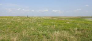 Charlie in the distance, four-wheeling across the prairie, Hoffman farm, 2014.08.19