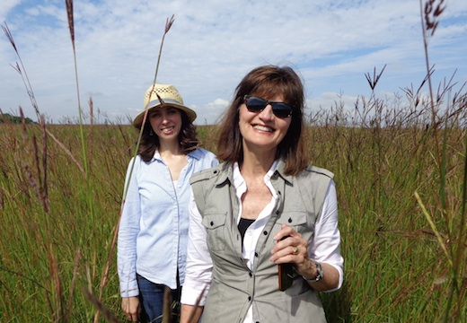 More unexpected wild flowers on the prairie: Carter Johnson's wife Janet (foreground) and his daughter-in-law Reka. They don't respond quite as well to heat and pollinators as other species on the farm. (CAH, 2014.08.21)