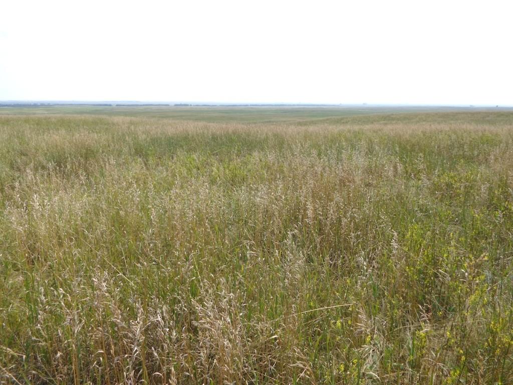 Prairie grass, Hoffman farm, 2014.08.19